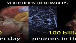 The Human Body in Numbers