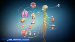 Idiopathic Scoliosis
