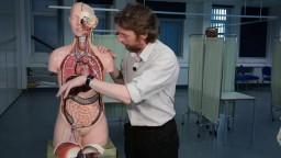 Liver (anatomy)