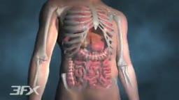 Diabetic Nephropathy Animation 3D