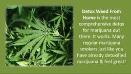 Detox Marijuana From Your Body