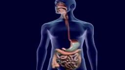 Digestive System Animation