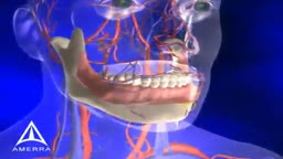 Tooth Anatomy 3D Medical Animation