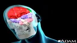 Brain Concussion Animation