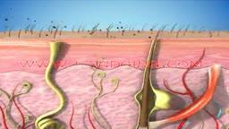 Dermatology Animation