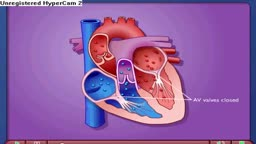 Cardiac Cycle - Systole & Diastole