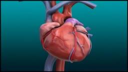 Myocardial Blood Flow