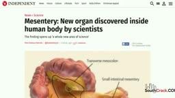 Mesentery - A New Organ Identified In Human Body