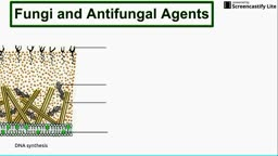 Fungi and Antifungal Agents